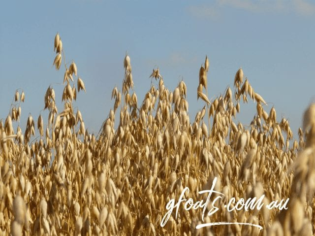 Statement on Chemicals in Oats