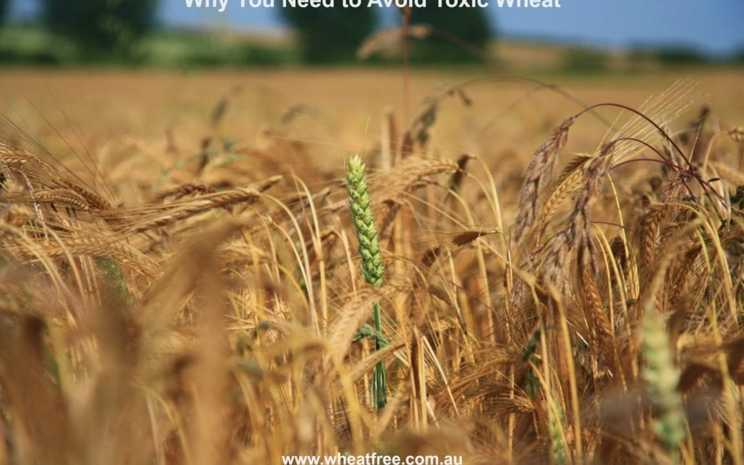 Why you need to avoid Toxic Wheat